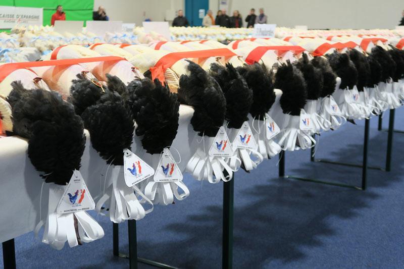 Les volailles prêtes à être jugées aux concours des Glorieuses de Bresse